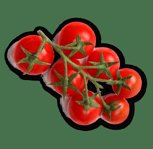 pomidory2018