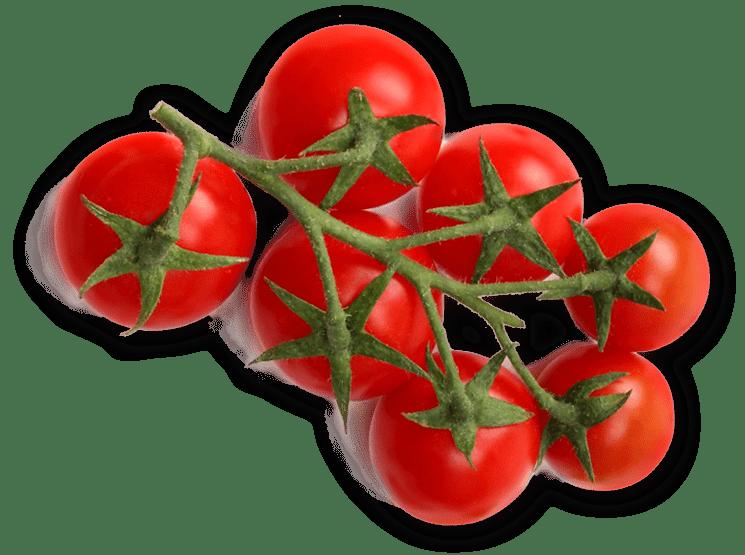 zielex pomidory5